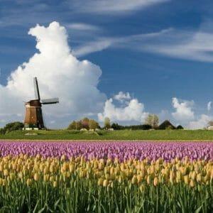 VWO Nederlands